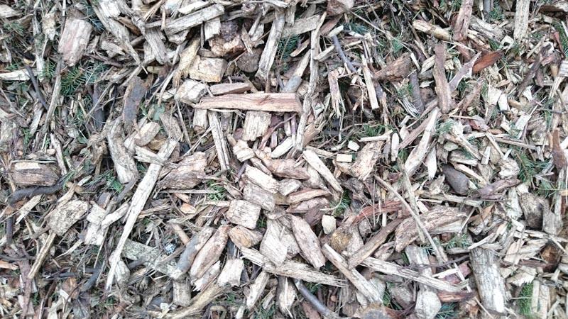 Biomasse-Waldhackgut